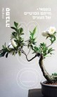 בונסאי, חייהם הפרטיים של העצים